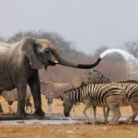 Namibia Parco Etosha