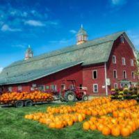 raccolta delle zucche nel Vermont